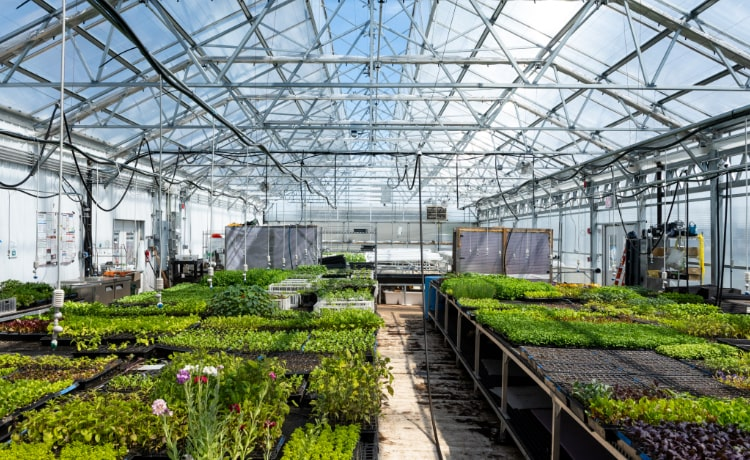 Brooklyn Grange rooftop green house on top of Liberty Bklyn. 3.2 acre rooftop farm and event space open to commercial, industrial and warehouse tenants